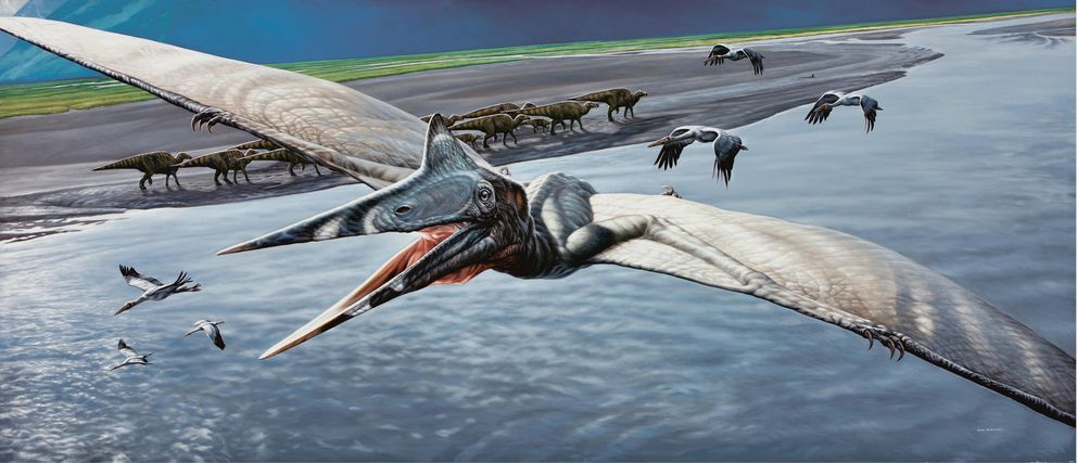 Pterosaurs, or flying reptiles, are not dinosaurs, but lived at the same time. The wings of pterosaurs are formed mostly from a greatly elongated fourth (ring) finger. Although rare, we know that large and small species lived in Alaska based on their distinctive fossil footprints. (James Havens / @alaskapaleoproject)