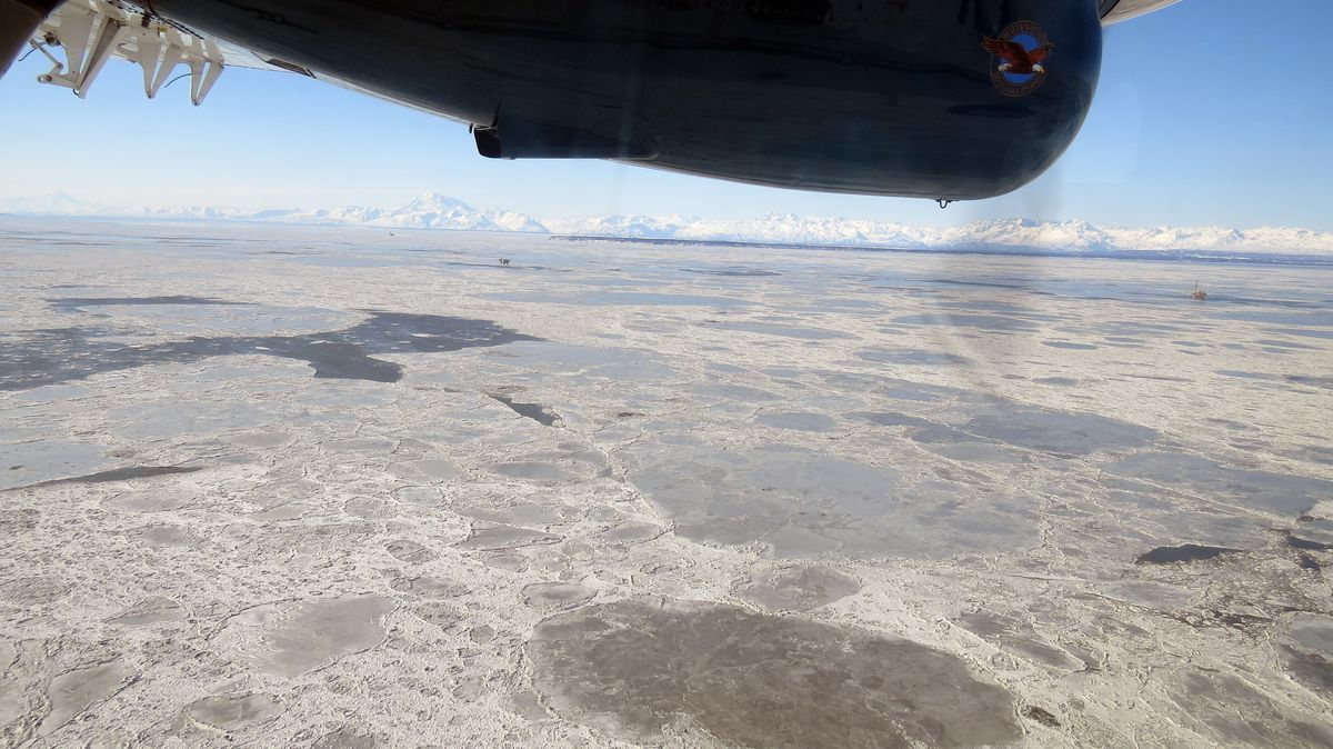 Pan ice is abundant in Cook Inlet on March 9 in the general area of the natural gas leak from a Hilcorp Alaska pipeline carrying fuel gas for use by offshore platforms. Sea surface bubbles from the leak could not be detected due to the ice cover.(Jacob Cunha / Alaska Department of Fish and Game)