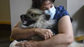 ICU nurses at an Anchorage hospital are worn down from the pandemic. For one afternoon, a crisis-response dog's visit offered a brief respite.