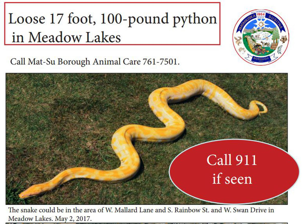 "The Matanuska-Susitna Borough sent out a statement Tuesday warning residents in the Meadow Lakes area to be on the lookout for a 17-foot-long snake that may be on the loose in the area. The snake pictured is ""the type of snake"" believed to be on the loose, according to borough spokeswoman Patty Sullivan. (Mat-Su Borough)"