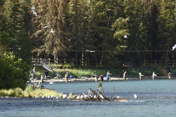 Anglers ply the Russian River on June 28. Escapement numbers are well behind last year so far on the Russian River, but managers remain confident the goals will be met. (Elizabeth Earl)