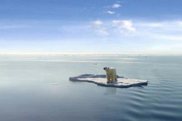 Polar bear floating on ice.