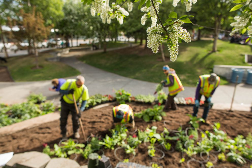 City gardeners plant flowers and ornamental plants in beds at Town Square Park in 2016. (Loren Holmes / ADN)