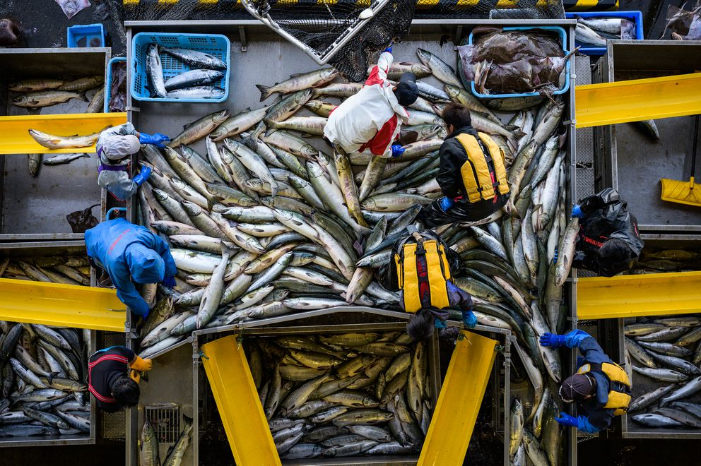 Fishermen unload salmon in September at a port in Utoro, Japan, on the Shiretoko Peninsula. (Photo for The Washington Post by Salwan Georges)