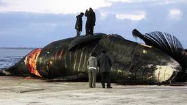 A whale hunt that saved an Alaska Native tradition