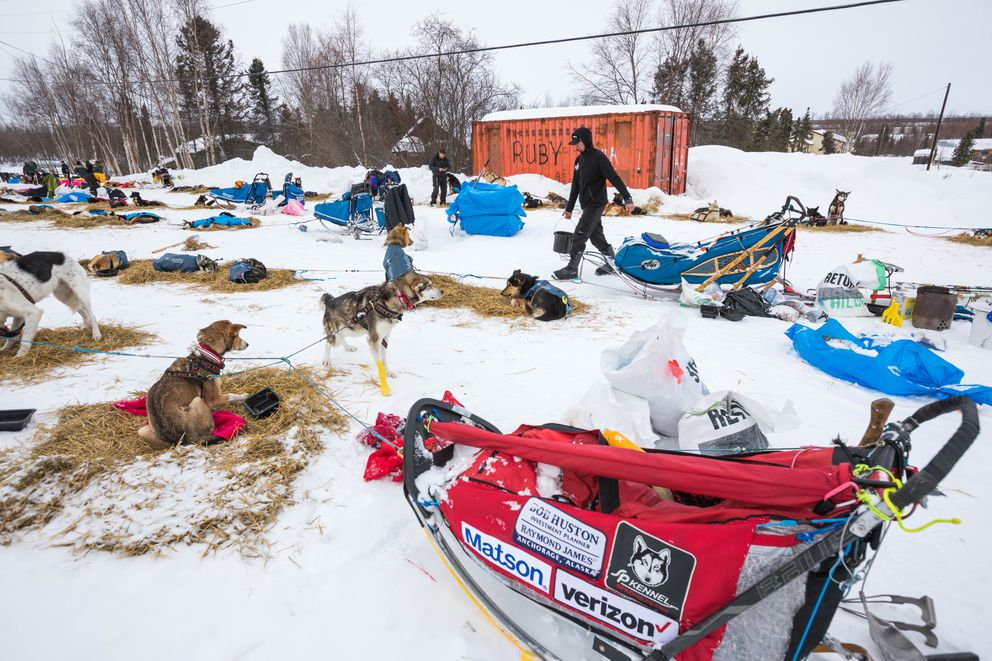 Matthew Failor carries water to his dog team Friday in Shageluk. (Loren Holmes / ADN)