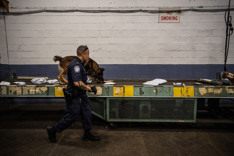Bence, a narcotics detector dog, smells packages with its CBP handler, officer Sergio Arias, at the John F. Kennedy International Airport's mail facility in New York on Sept. 7, 2018. (Washington Post photo by Salwan Georges)
