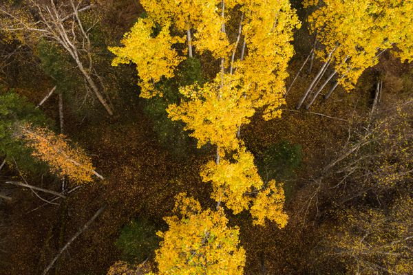 Fall colors near Beach Lake Friday, Sept. 29, 2017. (Loren Holmes / Alaska Dispatch News)