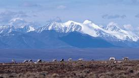 State agency picks companies to plan Arctic refuge oil exploration, despite suspension by Biden administration