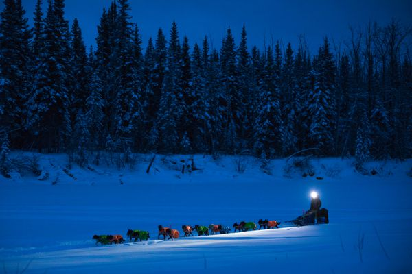Scott White arrives at the Nikolai checkpoint on Wednesday during the Iditarod Trail Sled Dog Race. (Loren Holmes / ADN)