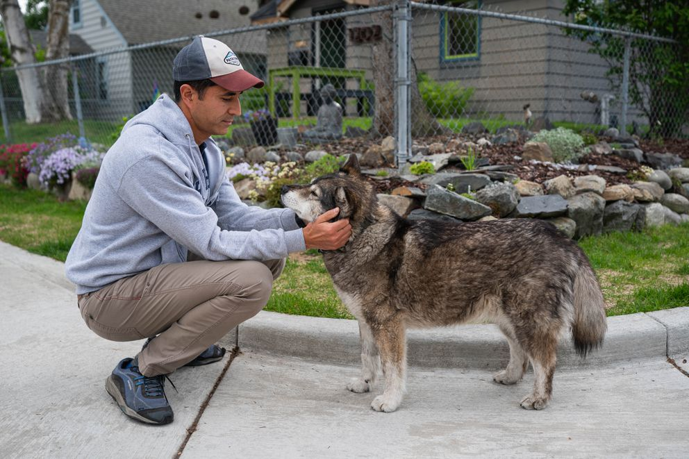 Tonio Nguyen pets his dog Newtok on Wednesday, June 17, 2020 in South Addition. (Loren Holmes / ADN)