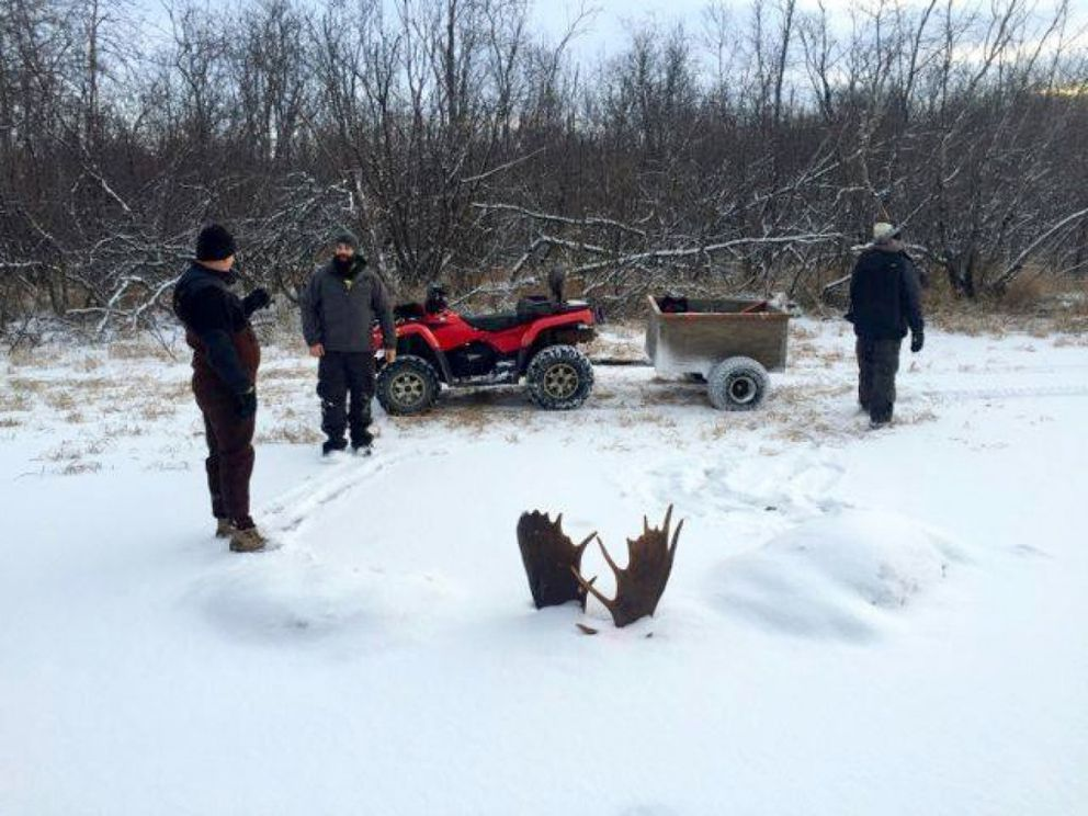 Nearly two weeks later, Brad Webster and friends went to recover the two moose heads. (Jeff Erickson via The Washington Post)