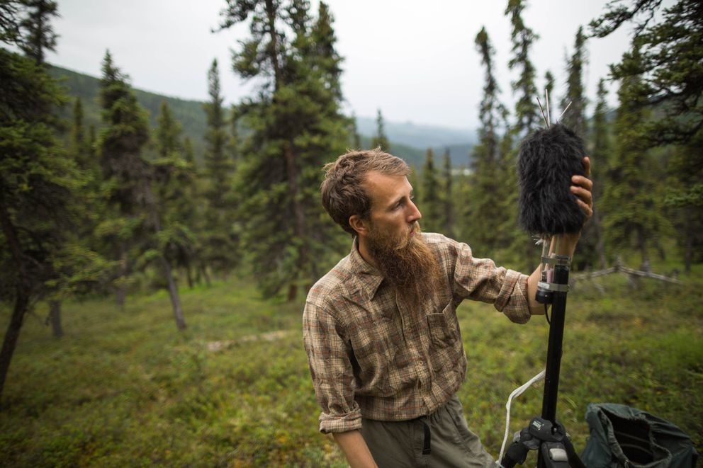 Betchkal installs a sound-monitoring station near Triple Lakes in the Denali Park wilderness on July 18, 2016. (Loren Holmes / Alaska Dispatch News)