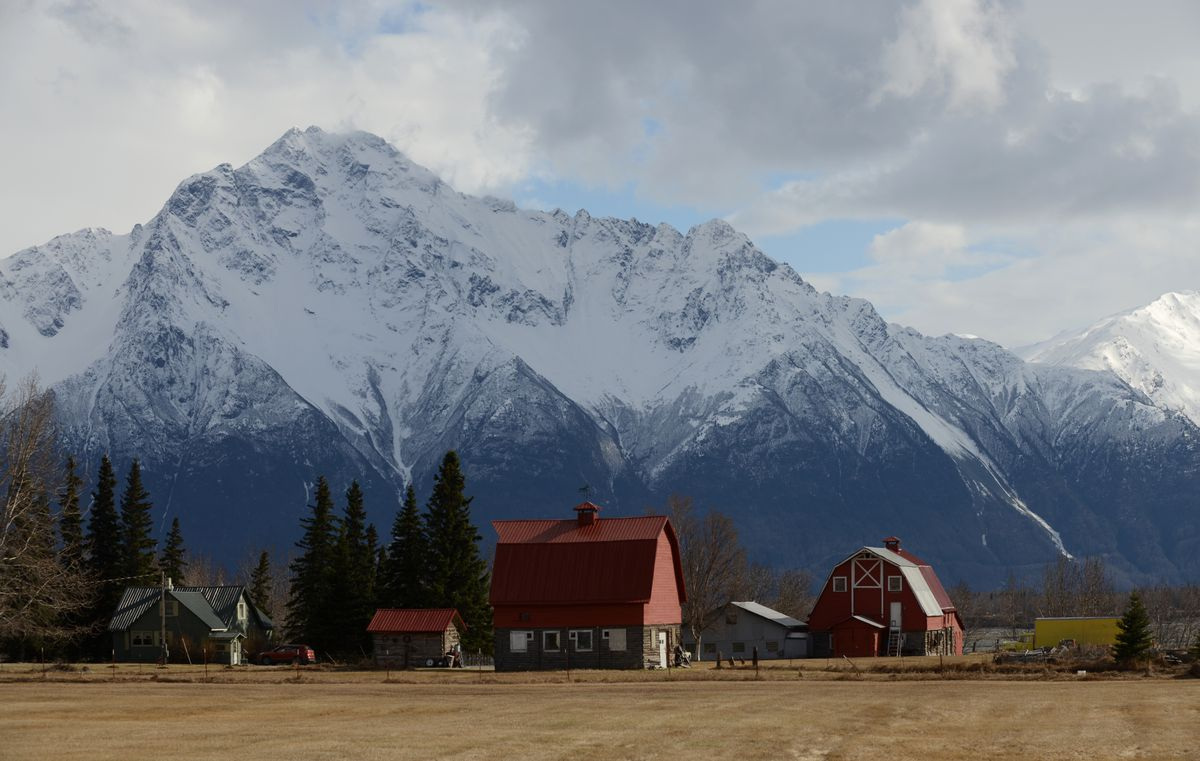 Two Matanuska Colony barns on the Wesley Grover property sit in the spring sunshine as Pioneer Peak, in the Chugach Mountains, towers above in the Palmer area on Wednesday May 2, 2018. (Bob Hallinen / ADN)