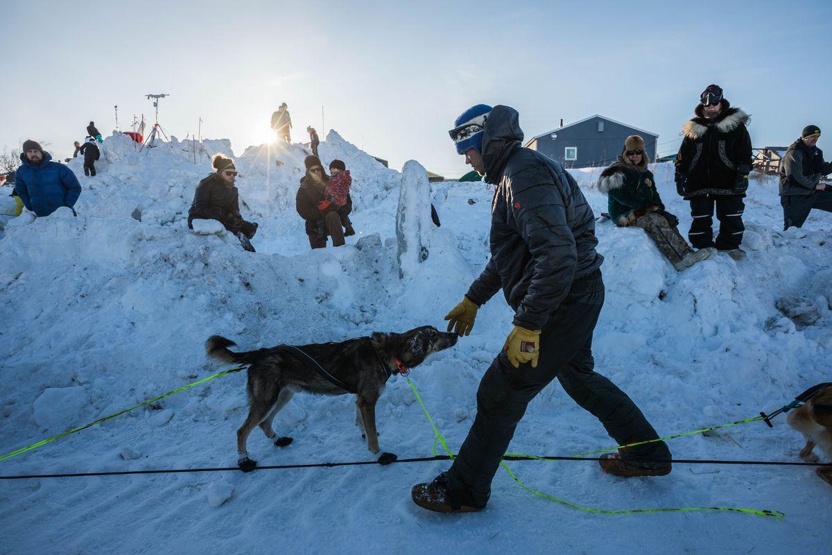 Joar Leifseth Ulsom walks through his dog team after arriving in Unalakleet on Sunday. (Loren Holmes / ADN)