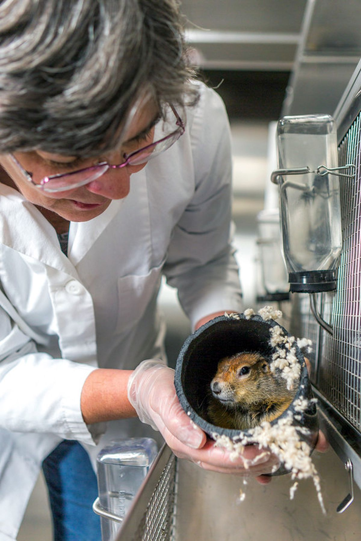 Jeanette Moore, UAF Institute of Arctic Biology research professional, holds an arctic ground squirrel. (Todd Paris / UAF)