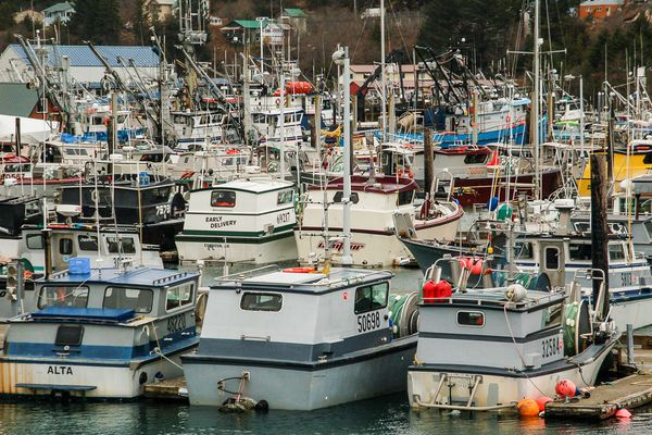 In a letter to the chief executive officer of Sodexo USA, Begich said he's troubled by reports that the company only buys seafood certified by a single broker -- one that doesn't certify Alaska fish.