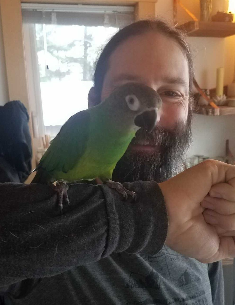 Axel, a sooty-headed conure, is perched on the arm of Jedediah Blum-Evitts on Tuesday, Dec. 8, 2020, in Haines. Axel is one of the two displaced birds being taken care of by Caitie Kirby and friend Blum-Evitts until their owner can safely take them back. (Caitie Kirby photo)