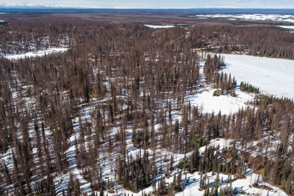 South Rolly Campground, in the Nancy Lake State Recreation Area, is one of two state campgrounds that will be closed this summer due to the threat of beetle-killed spruce falling. Photographed Wednesday, April 10, 2019. (Loren Holmes / ADN)