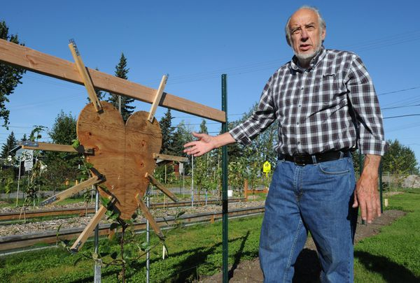 Paul Lariviere is using a form to shape a pear tree into a heart.  (Bill Roth / ADN)