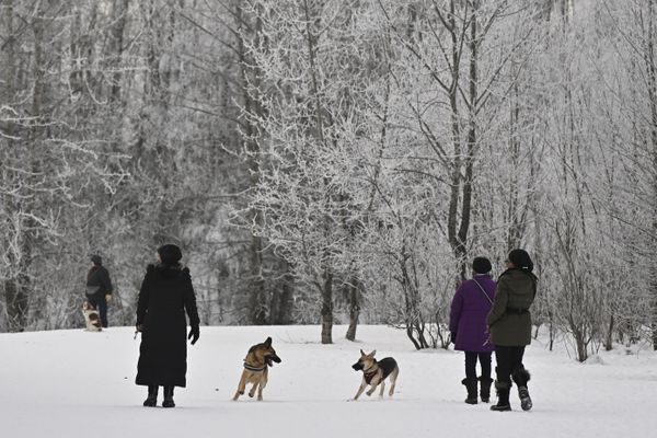 Dogs play at University Lake Dog Park on January 25, 2021. (Marc Lester / ADN)