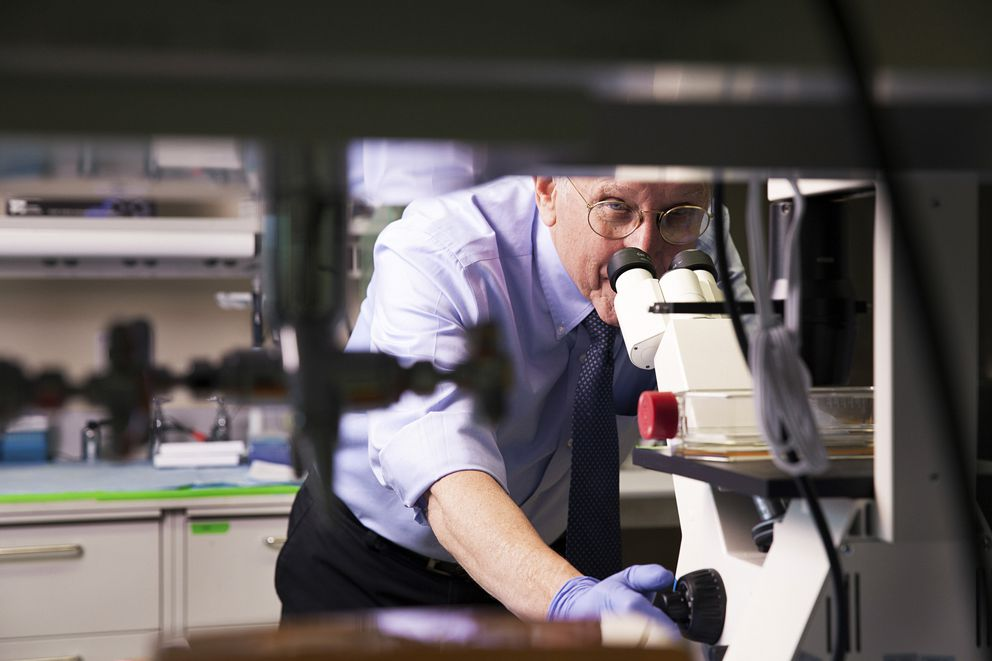 Dr. Steven Rosenberg, who has led the surgery branch at the National Cancer Institute for 42 years, at his lab in Bethesda, Md., May 5. (Jesse Dittmar/The New York Times)