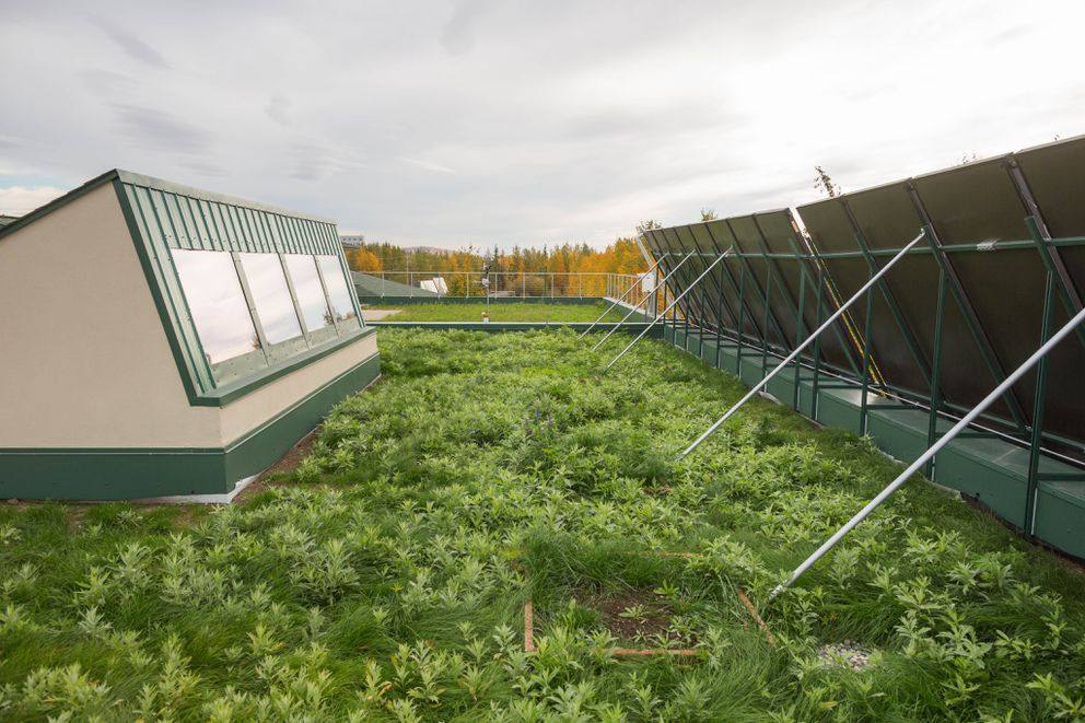 The sod roof at the Cold Climate Housing Research Center in Fairbanks on September 9, 2015. (Cold Climate Housing Research Center)