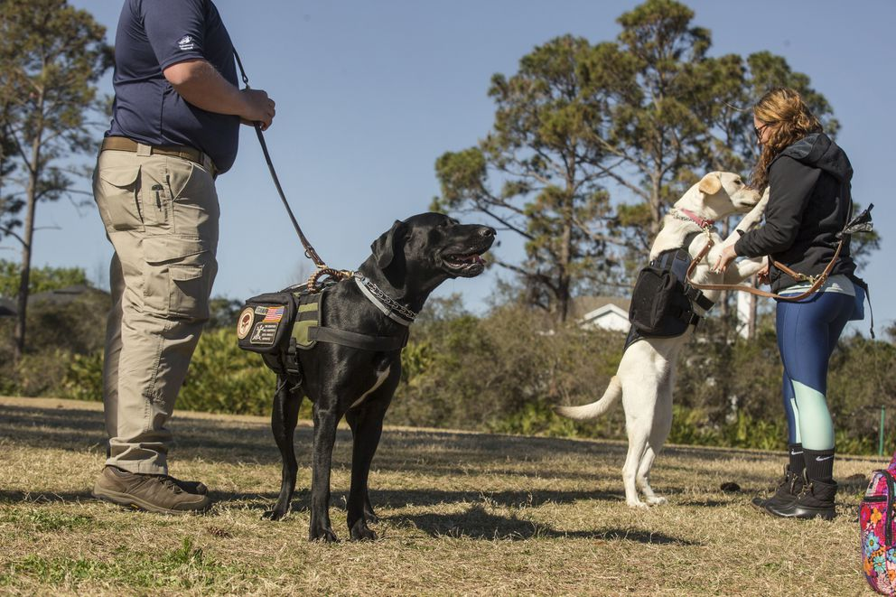 Instructor Adam Fuller and his dog JD watch Krista Shirey and her dog Bobbi celebrate a string of successful commands during K9s for Warriors training. (Photo for The Washington Post by Kile Brewer)