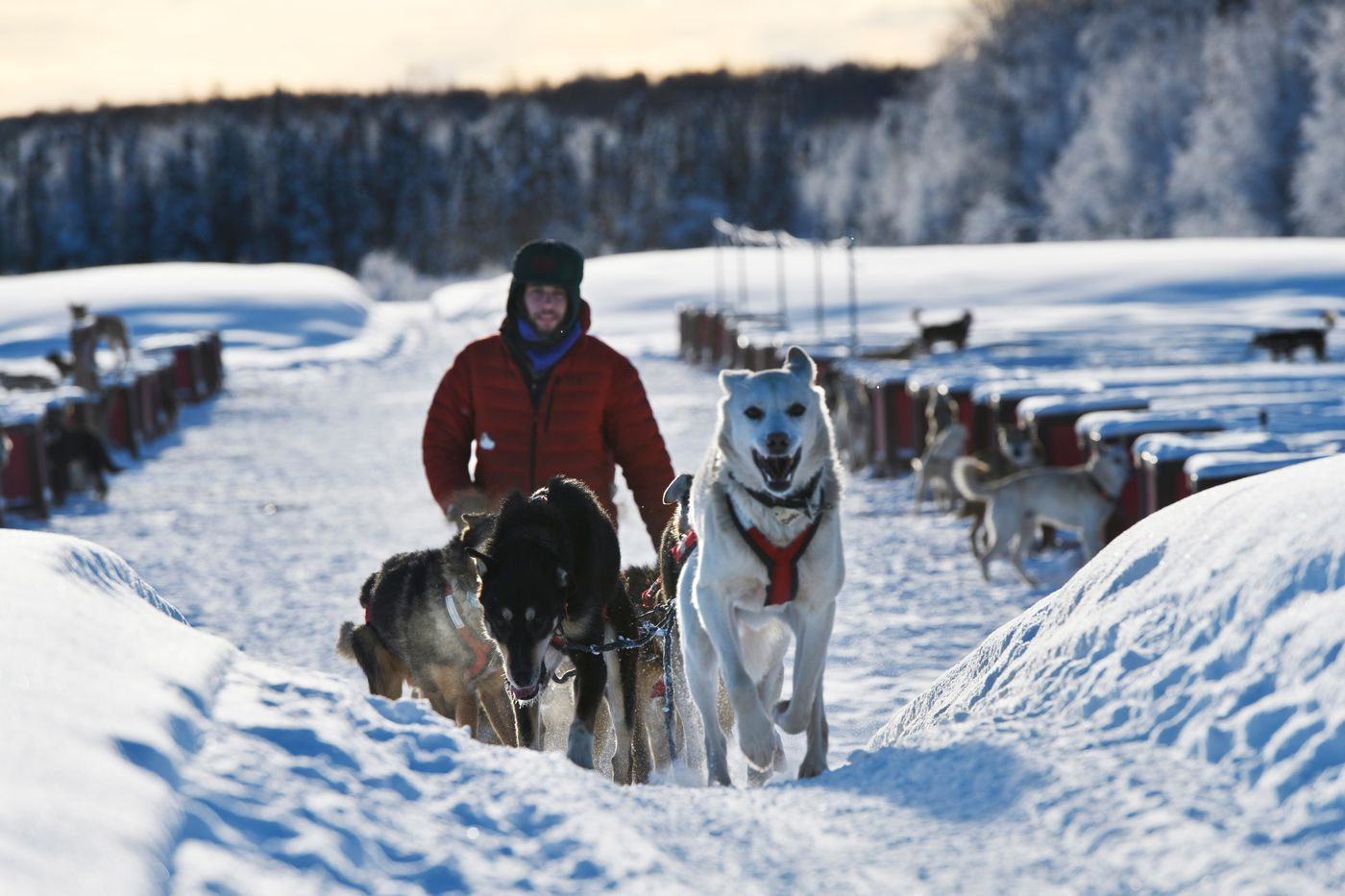 Musher Sean Underwood leaves Dallas Seavey's dog yard in Talkeetna for a short run on January 29, 2021. Underwood works at Seavey's kennel and plans to run a team of its dogs this year. (Marc Lester / ADN)