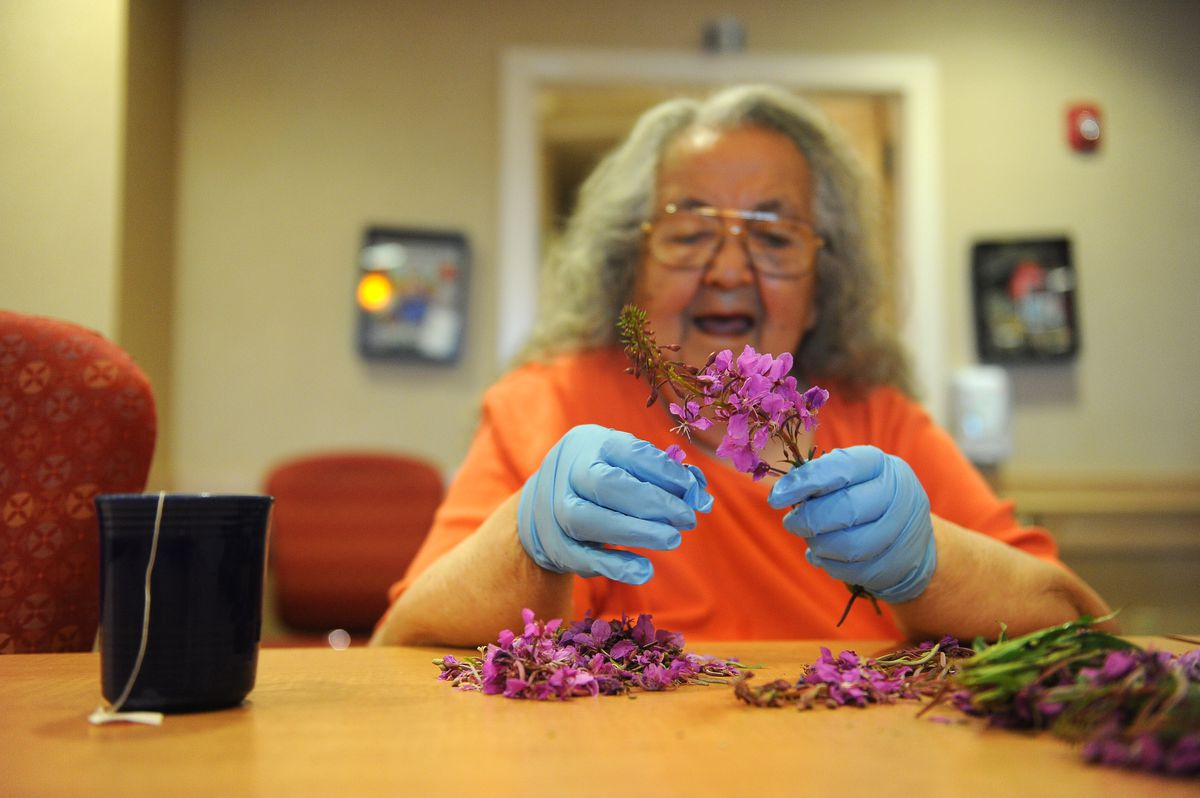 Elder May Bernhardt picks fireweed blossoms off the stalks to make fireweed jelly at the Maniilaq Association elder care facility in Kotzebue on Aug, 8, 2014. (Bob Hallinen / ADN)