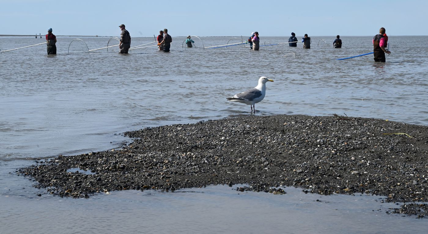 People hoping to dipnet salmon stand in the waters at the mouth of the Kenai River on Tuesday. (Anne Raup / ADN)