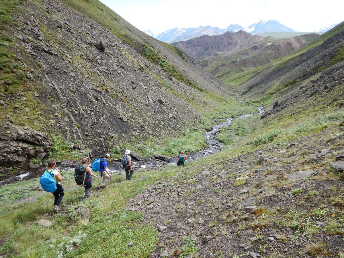 A team of UAF students and paleontologists, along with Denali National Park employees, explore Denali's backcountry in search of dinosaur fossils in July 2016. (Pat Druckenmiller / University of Alaska Museum of the North)