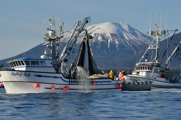 JAMES POULSON / Daily Sitka Sentinel Seiners fish for herring near Kruzof Island Thursday afternoon, March 19, 2015, as the season get under way west of Sitka.