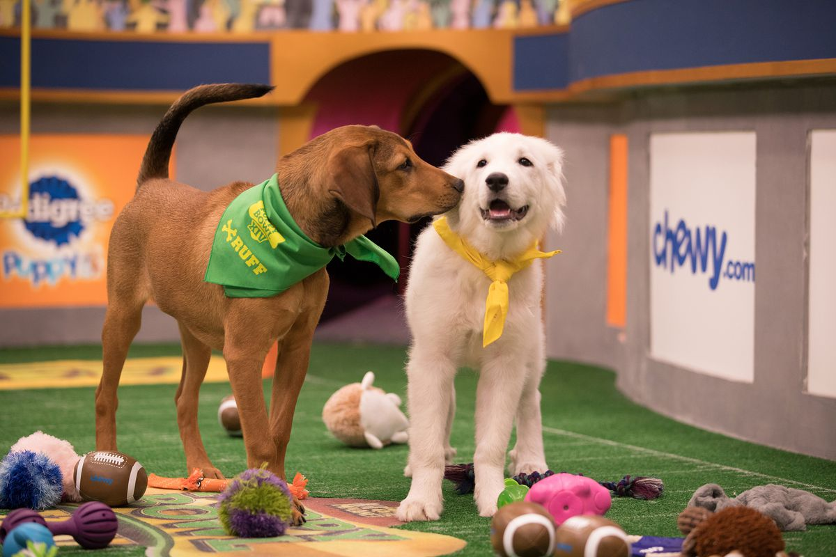 Puppies Barry and Olympia take the field for Puppy Bowl XIV. (Damian Strohmeyer/Animal Planet)