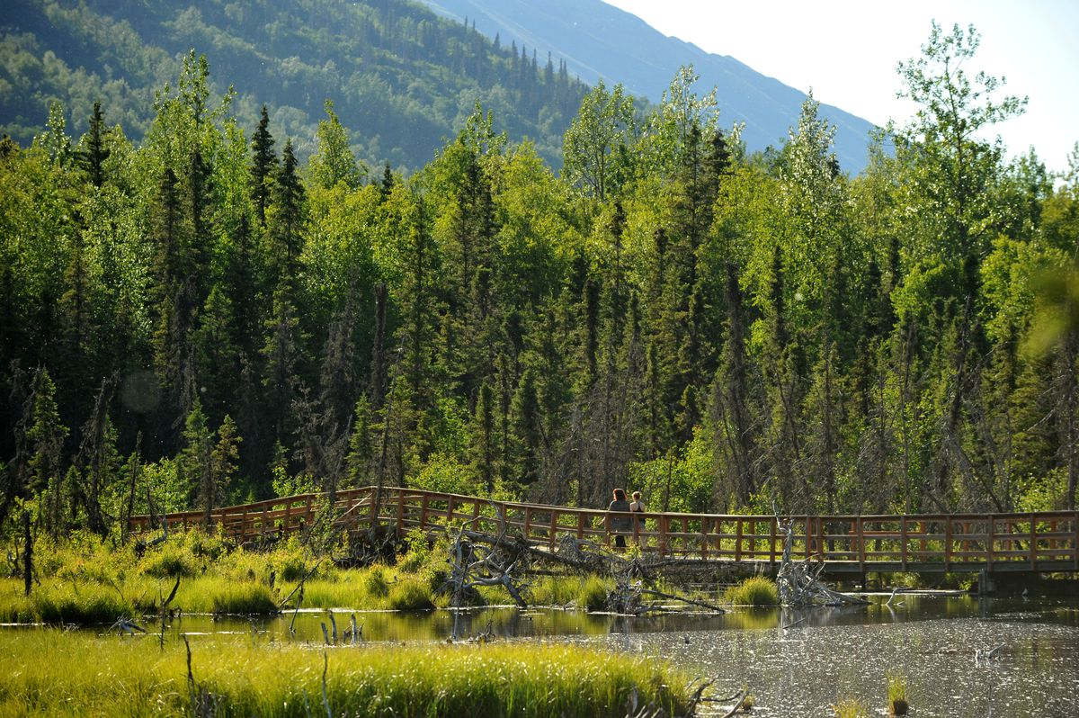 The Albert Loop Trail crosses a beaver dam on a boardwalk near the Eagle River Nature Center. (Bob Hallinen / Alaska Dispatch News)