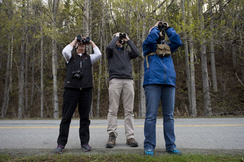 From left, Antonia Fowler of Anchorage, Jeff Walters of Fairbanks, and Abby Confer of Arizona try to spot the falcated duck from along the Old Seward Highway next to Potter Marsh. An opportunity to see a falcated duck is drawing birders to Potter Marsh on May 9, 2019. The Asian bird is rarely spotted in Alaska. (Marc Lester / ADN)