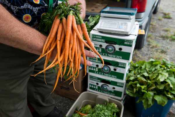 Bob Shumaker of Black Bear Farms in Palmer, holds his Nantes carrots. The Mountain View Farmers Market, in its first year, operates on Thursdays through August along Mountain View Drive. It's hosted by Anchorage Community Land Trust. (Marc Lester / Alaska Dispatch News)