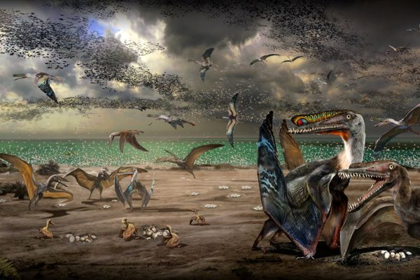An artist's illustration shows individuals from the fish-eating pterosaur species Hamipterus tianshanensis, including adults, juvenile and eggs in this handout illustration obtained by Reuters November 30, 2017. (Zhao Chuang / Handout via Reuters)