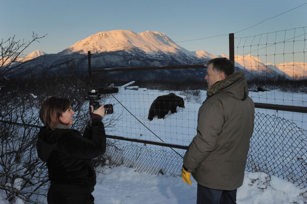Amberlee Mucha of Discovery Studios interviews Mike Miller, founder and executive director of the Alaska Wildlife Conservation Center, near a female brown bear in Portage on Dec. 4. (Bill Roth / Alaska Dispatch News)