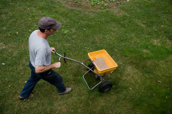 Man spreads fertilizer on a lawn. (Getty)