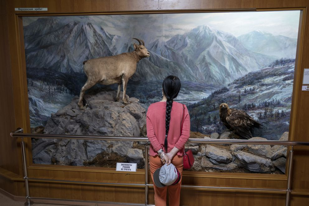 At the Yakutsk State Museum of History and Culture, a woman looks at a diorama of a landscape that climate change threatens to alter forever. (Washington Post photo by Michael Robinson Chavez)