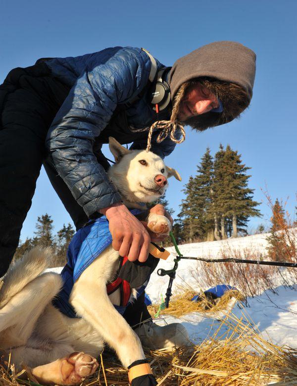 Iditarod musher Nicolas Petit prepares to leave Koyuk during the Iditarod Trail Sled Dog Race on March 13, 2017. (Bob Hallinen / Alaska Dispatch News)