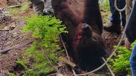 Sitka-based trooper kills brown bear chasing his dog
