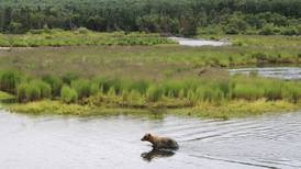 Bear 'swatted' Katmai National Park visitor