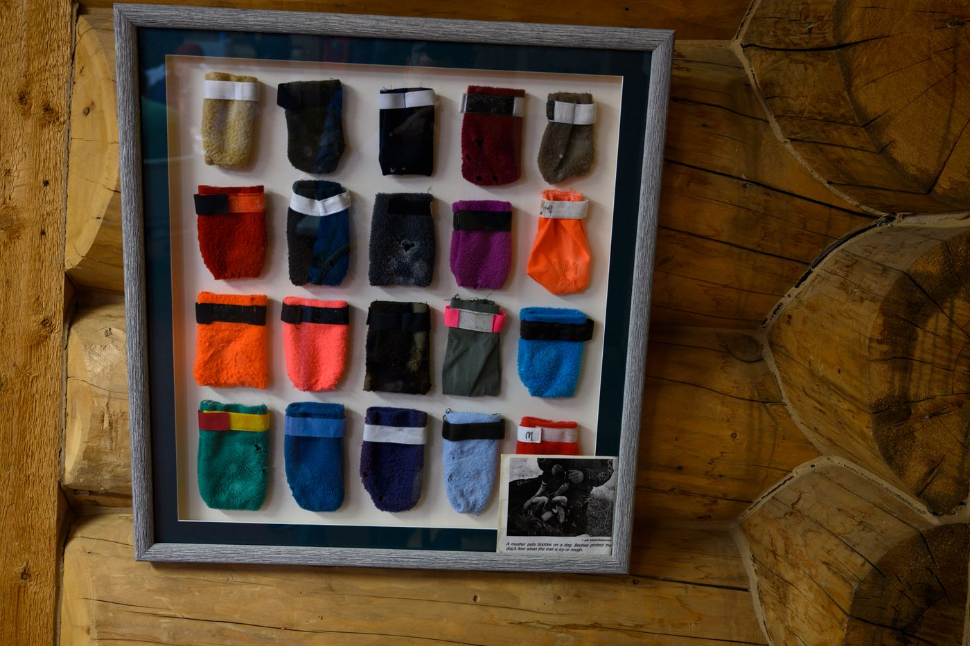 A display of booties hangs in Iditarod Headquarters in Wasilla on March 4, 2020. (Marc Lester / ADN)