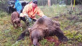 Sterling man kills 9-foot grizzly trying to break into his home