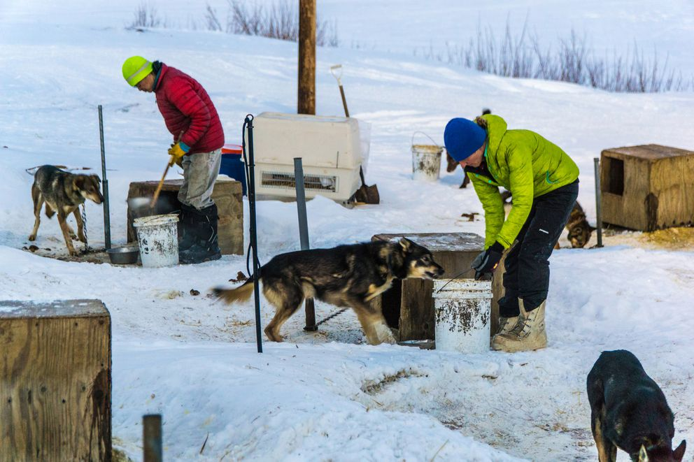 Robin Beebee, right, helps Harry Douglas feed his dog team a slurry made from frozen whitefish. (Seth Adams)