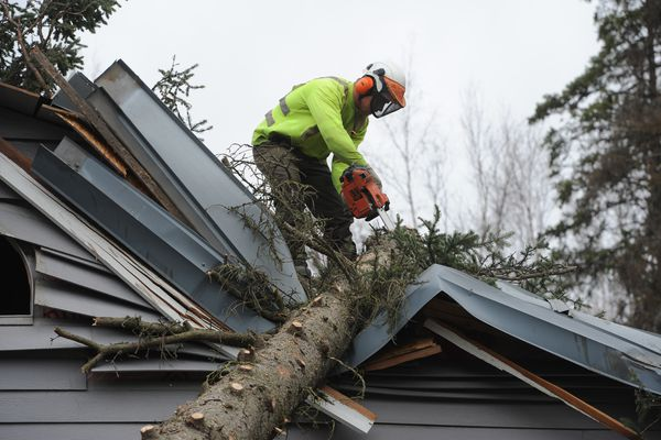 Brett Smolnik of Carlos Tree Service, Inc. removes a spruce tree that fell on a home near Elmore Road and E 88th Avenue during the windstorm on Tuesday, April 24, 2018. (Bill Roth / ADN)