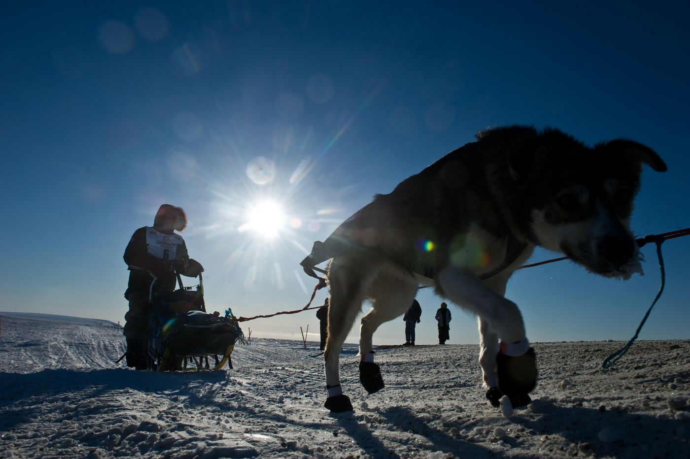 Ketil Reitan approaches Nome. Mushers continued to trickle in to Nome, the finish of the Iditarod Trail Sled Dog Race, on Wednesday, March 16, 2016.