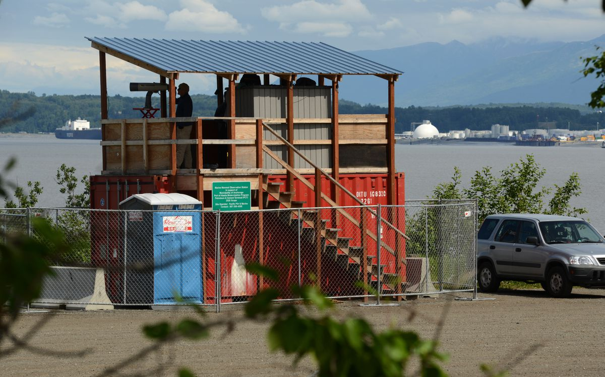 Observers at Earthquake Park near the Coastal Trail keep eyes on Knik Arm, looking for marine mammals during Port of Alaska dock construction on Tuesday. (Anne Raup / ADN)